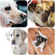 Dog Wallpapers by Dzenan Bronja