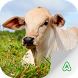 Cattle Guide by Agrimind
