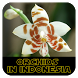 Orchids in Indonesia by ikcljava