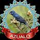 Free Azulao chilrear 2017 by Canto de Brazileiros