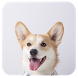 Cute Dog 91 Launcher Theme by Mobo Developer Team