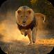 Real Lion Simulator 2017