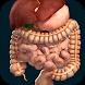 Organs 3D (Anatomy) by Ing. Victor Michel Gonzalez Galvan