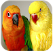 Cutest Parrots Wallpapers HD by AppBelle