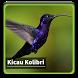 Kicau Suara Burung Kolibri by kangdeveloperstudio