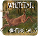 Whitetail Hunting Calls by lavender