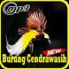Kicau Burung Cendrawasih Mp3 by Indo Barokah94