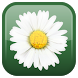 Daisy Flower Live Wallpaper by Wasabi