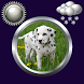 Puppy Clock & Weather Widget by Compass Clock and Weather