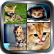 Cute Kitten Wallpaper Cats Pictures Background HD by Prangel Technology