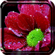 Shiny Flowers Live Wallpaper by Live Wallpaper HD 3D