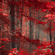 nature forest wallpaper by motion interactive
