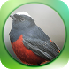 Bird Sounds Free by kicau mania dev