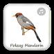Kicau Poksay Mandarin Gacor