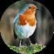 تربية الطيور by DivLc