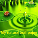 Natural wallpaper by skywevas technologies