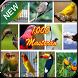 Best Bird Master Chirping by kicau mania apps