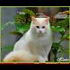 Kucing Beautiful