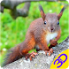 Squirrel 3D Live Wallpaper by 3D Wallpapers by Happe