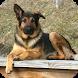 German Shepherd Pack 3 LWP by WallpapersLove