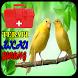 Terapi Kicau Burung Lengkap