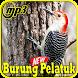 Kicau Burung Pelatuk Gacor Mp3 by Indo Barokah94