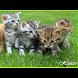 Kucing yang Cantik - Beautiful Cat by Aplication World Class Inc