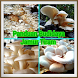 Panduan budidaya jamur tiram by singdroid