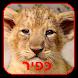 KEFIR KFIR LITTLE LION by Media Satria Indonesia