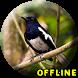 Suara Burung Kacer Full Isian MP3 by NeoutronApps