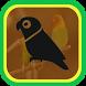 Kumpulan Masteran Kicau Burung Terbaru
