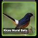 Kicau Suara Burung Murai Batu by kangdeveloperstudio