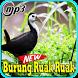 Kicau Burung Ruak Ruak Mp3 by Indo Barokah94