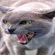 Angry Cat Live Wallpaper by Daksh Apps