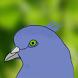 Pigeon Story by Yonhiki