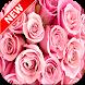 Pink Rose Wallpapers