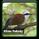 Kicau Suara Burung Poksay by kangdeveloperstudio