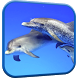 Dolphins Video Live Wallpaper by Wallpapers Studio Pro