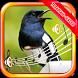 Terapi Kicau Burung Kacer by Sopo Jarwo, Boboiboy dan kicau burung Media