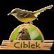Kicau Ciblek Master Gan by Tigabelas Corp