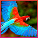 Bird Wallpapers by Andrian G