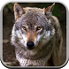 Wolf Sounds for Kids by Cheerful Sounds