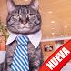 Fondos Gatitos by Apps Empresariales