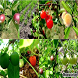 Fruit Garden Ideas by Muntasir