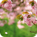 Spring Flowers Live Wallpaper by orchid