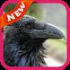 Raven Wallpaper by lucas17