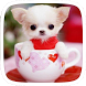 Cup Puppy Doggy by Heartful Theme