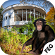 Escape Games- Abandoned Monkey by Escape Game Studio