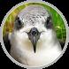 Madeira Petrel by Proinov