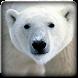 Polar Bear Sounds by Bagoez Studio